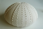 Large Coil-built Stoneware Sea Urchin with Spikes by Claire Gibson