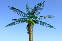 Coconut Tree by Martin Boyle